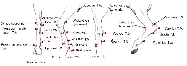 Les TARES (descriptions) Image002